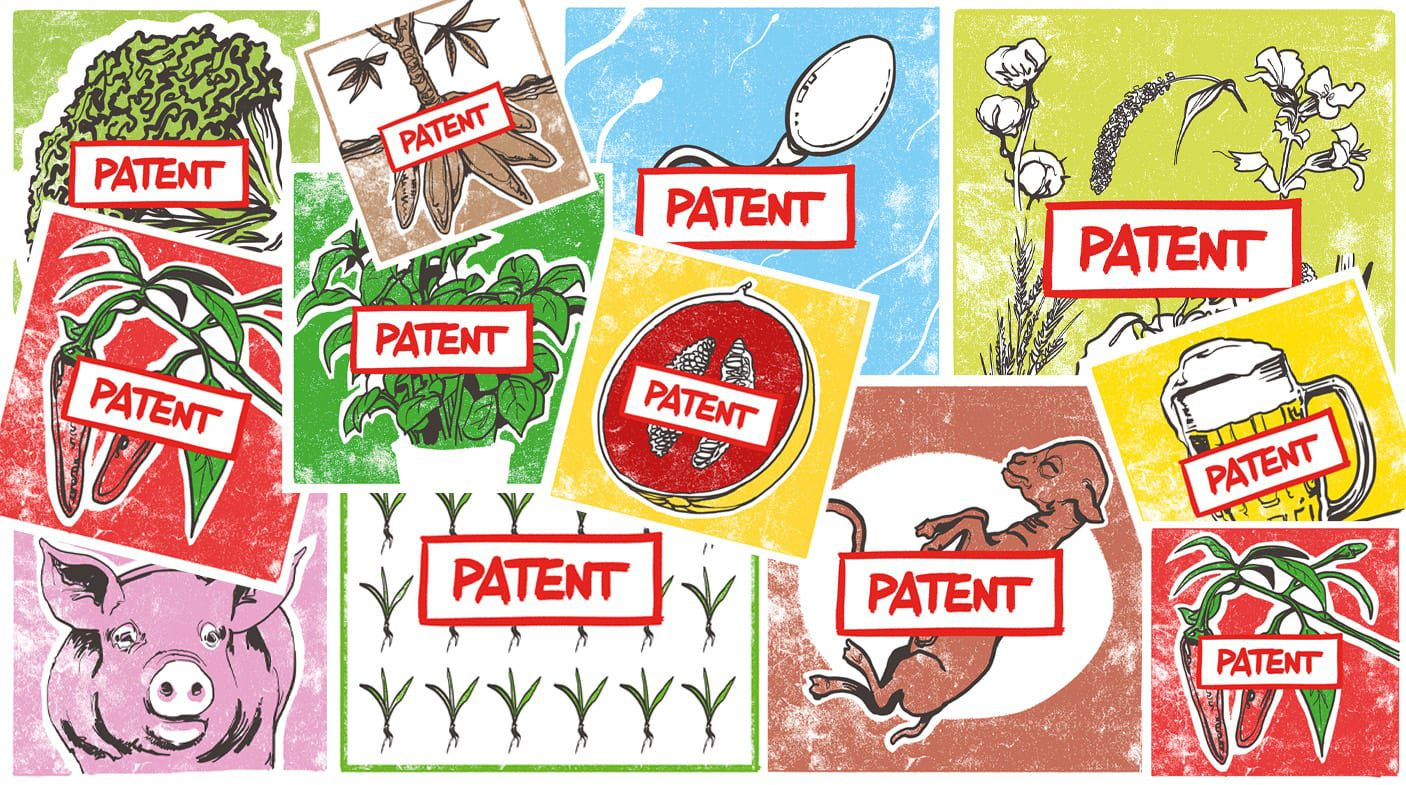 Eleven reasons why Europe needs to ban patents on food plants and farm animals