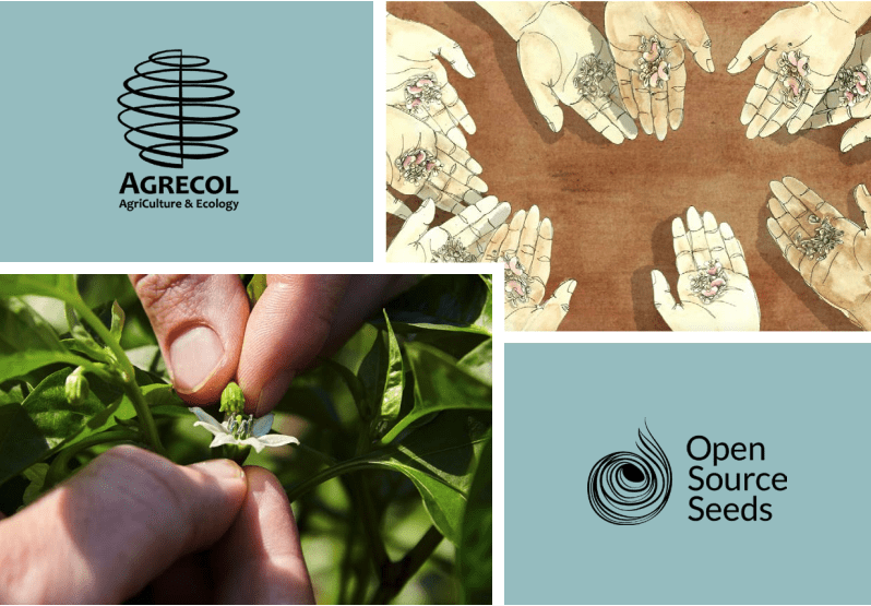 "New Agrecol Publication: ""Enabling Diversity  – ways to finance organic plant breeding"""